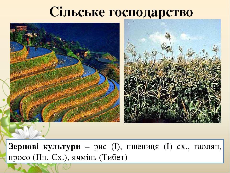 Сільське господарство Зернові культури – рис (І), пшениця (І) сх., гаолян, просо (Пн.-Сх.), ячмінь (Тибет)