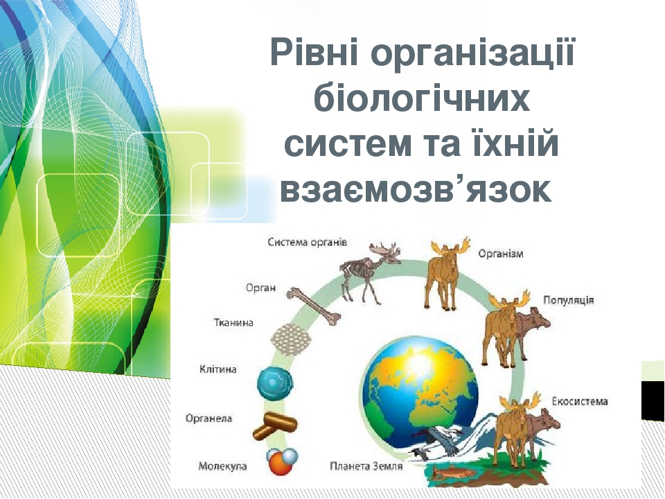 Рівні організації біологічних систем та їхній взаємозв'язок