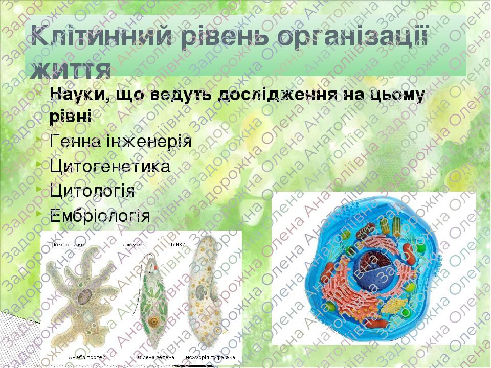 Науки, що ведуть дослідження на цьому рівні Генна інженерія Цитогенетика Цитологія Ембріологія Клітинний рівень організації життя
