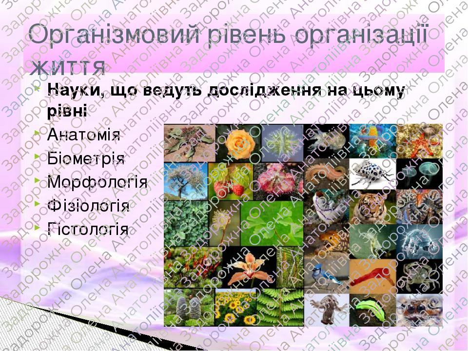 Науки, що ведуть дослідження на цьому рівні Анатомія Біометрія Морфологія Фізіологія Гістологія Організмовий рівень організації життя