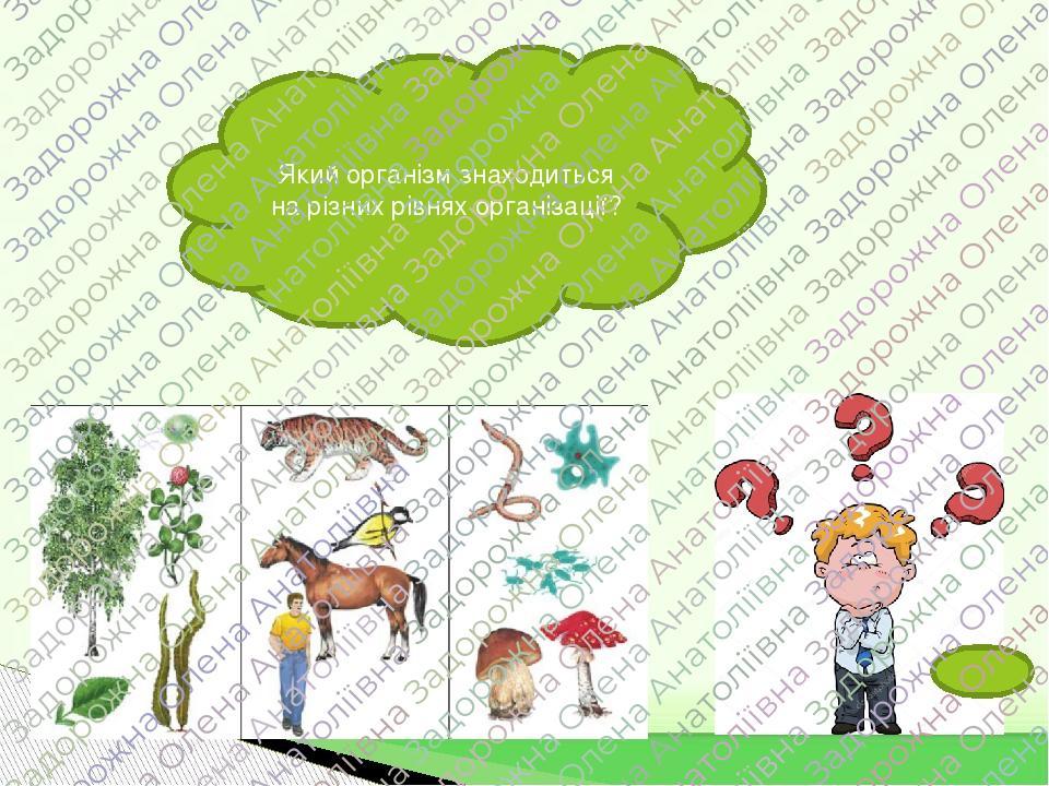 Який організм знаходиться на різних рівнях організації?