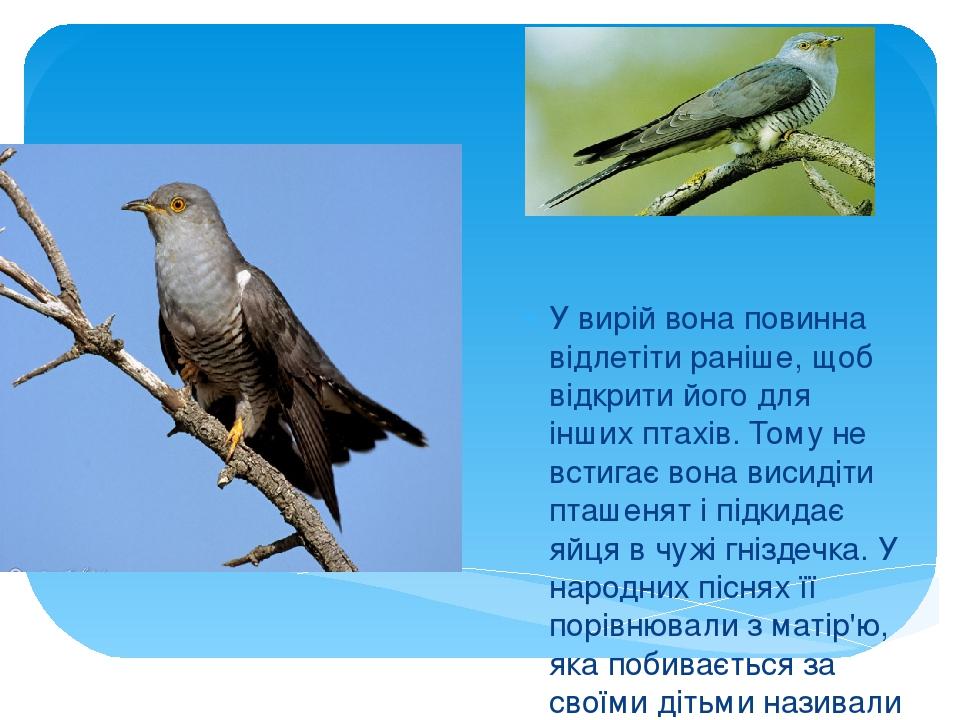 Зозуля У вирій вона повинна відлетіти раніше, щоб відкрити його для інших птахів. Тому не встигає вона висидіти пташенят і підкидає яйця в чужі гні...