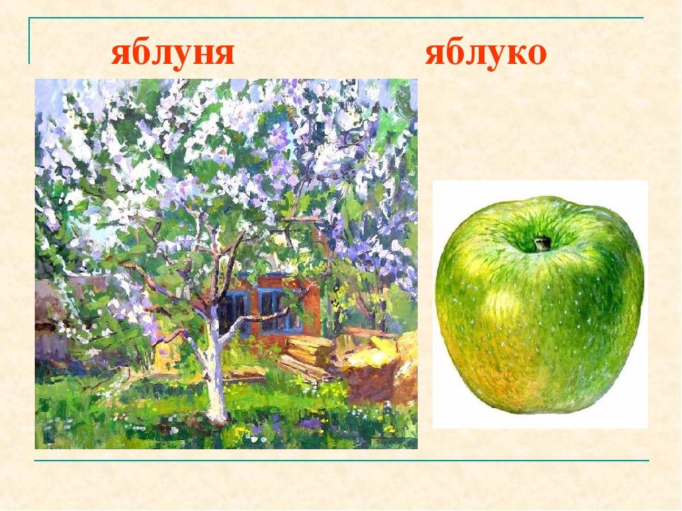 яблуня яблуко