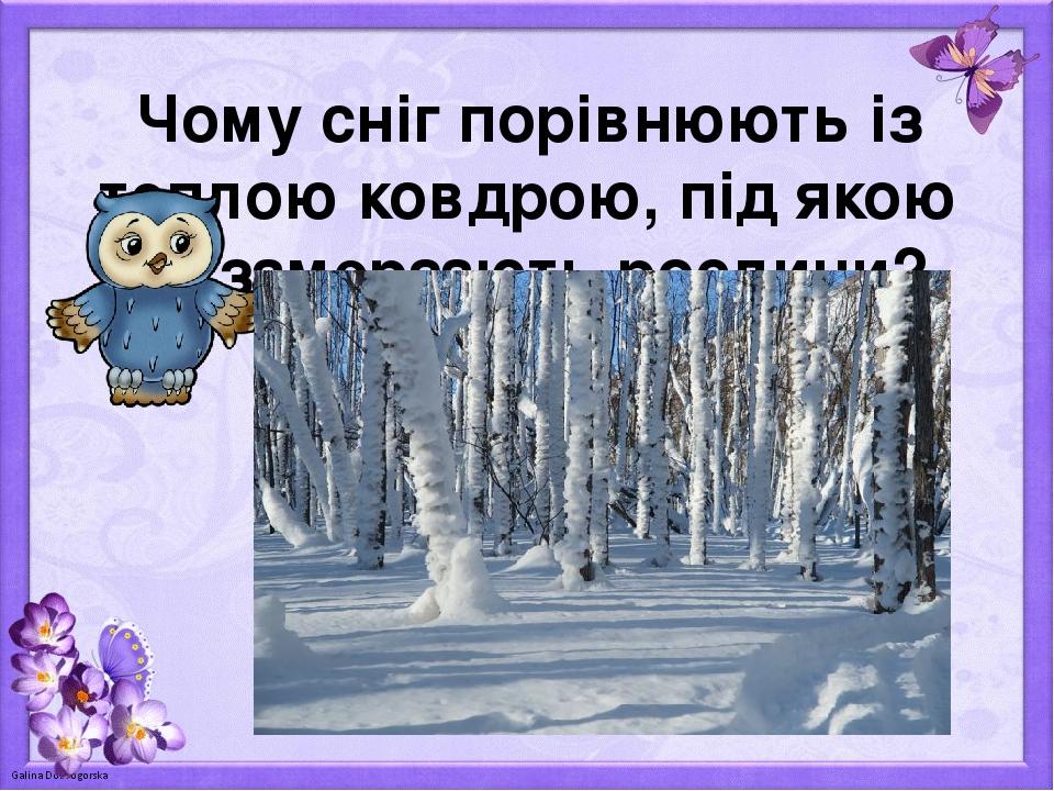 Чому сніг порівнюють із теплою ковдрою, під якою не замерзають рослини?
