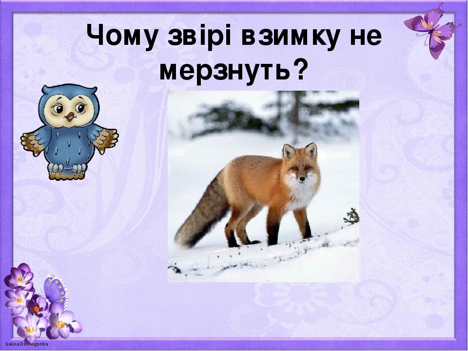 Чому звірі взимку не мерзнуть?