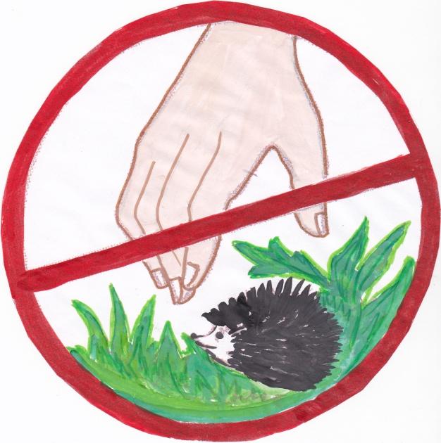Верни картинки, картинки об охране природы для детей дошкольного возраста