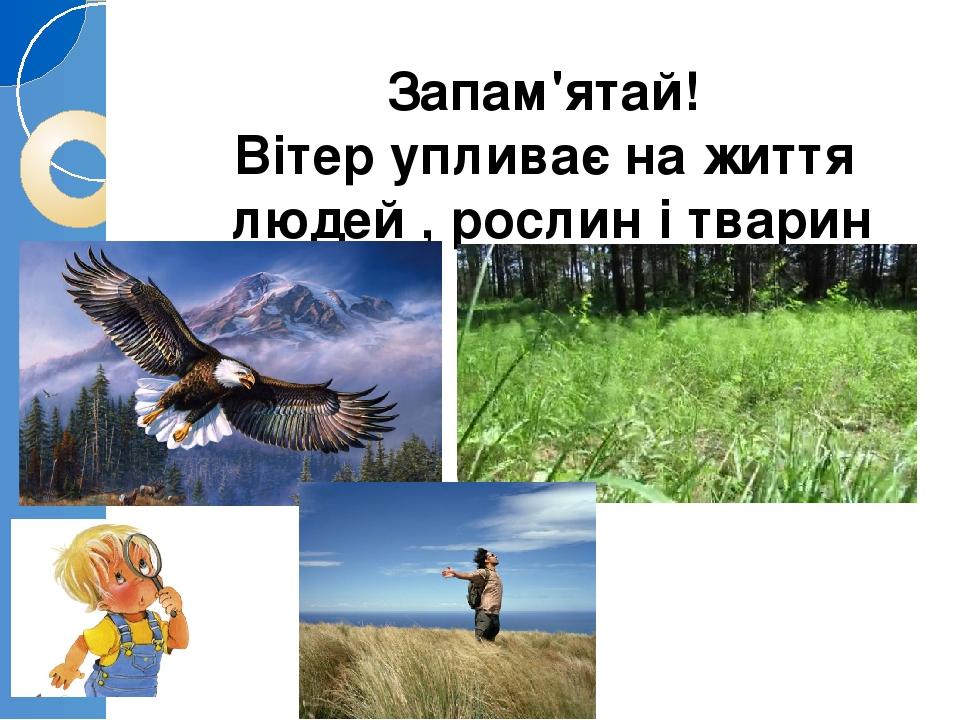 Запам'ятай! Вітер упливає на життя людей , рослин і тварин