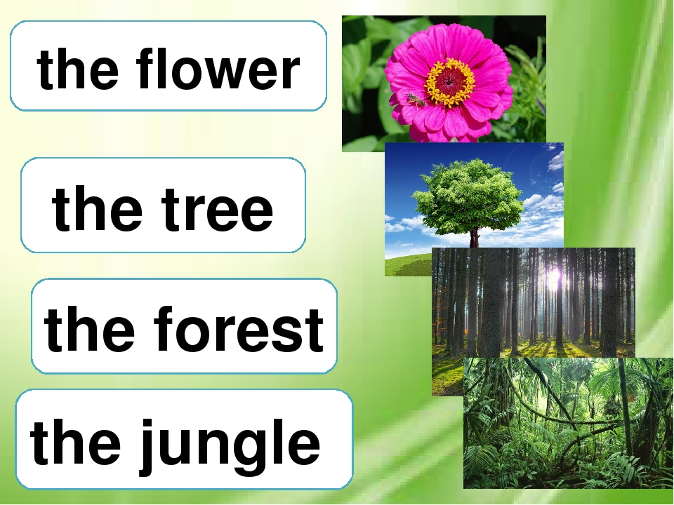 the tree the forest the jungle the flower