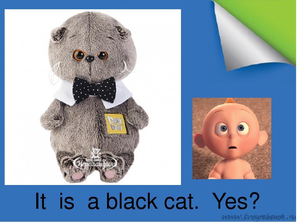 It is a black cat. Yes?