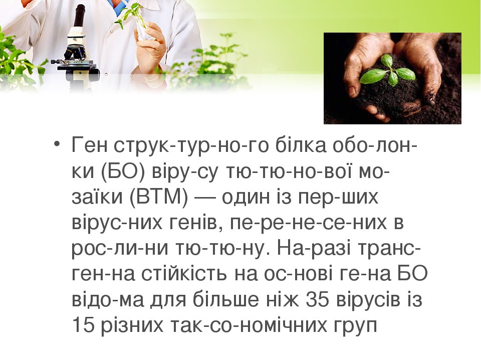 Ген структурного білка оболонки (БО) вірусу тютюнової мозаїки (ВТМ) — один із перших вірусних генів, перенесених в рослини тютю...