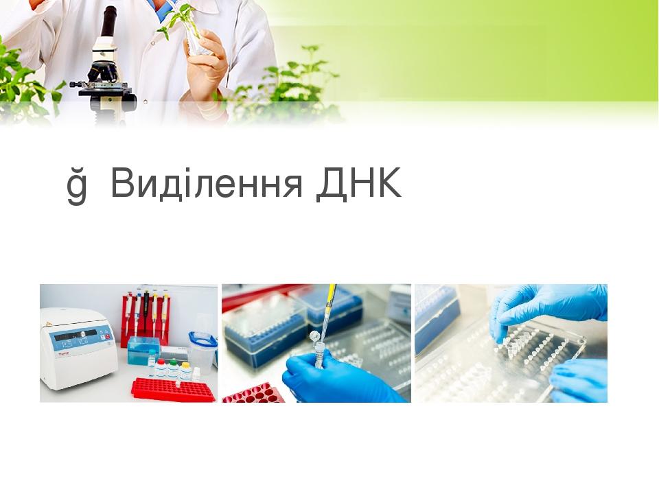 ○ Виділення ДНК