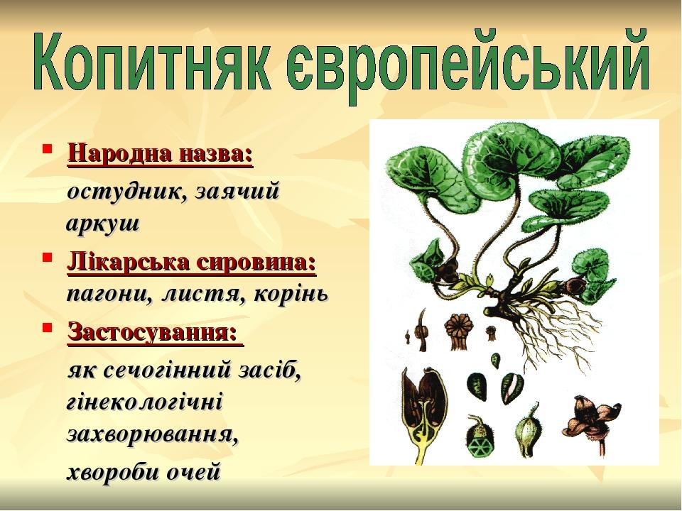 Народна назва: остудник, заячий аркуш Лікарська сировина: пагони, листя, корінь Застосування: як сечогінний засіб, гінекологічні захворювання, хвор...