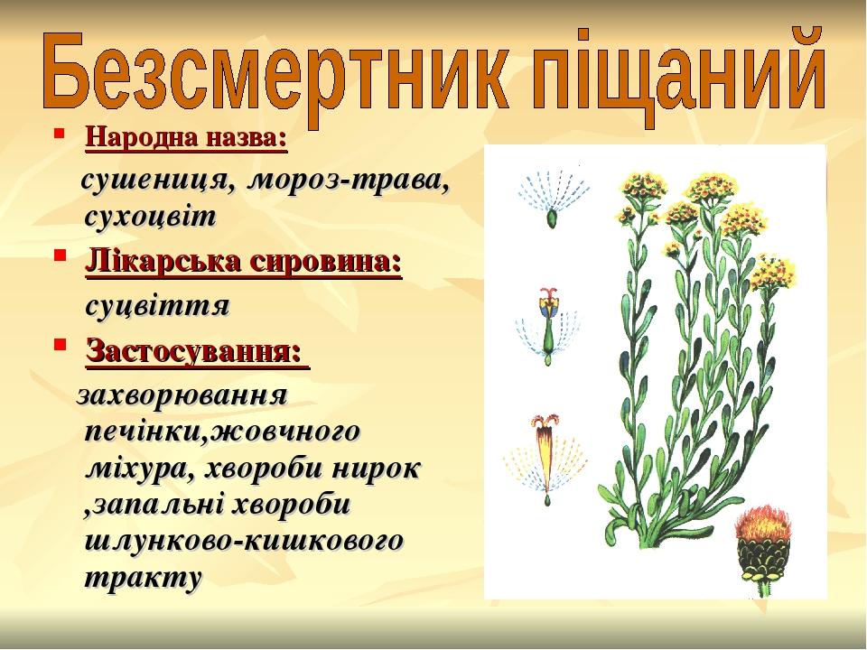 Народна назва: сушениця, мороз-трава, сухоцвіт Лікарська сировина: суцвіття Застосування: захворювання печінки,жовчного міхура, хвороби нирок ,запа...