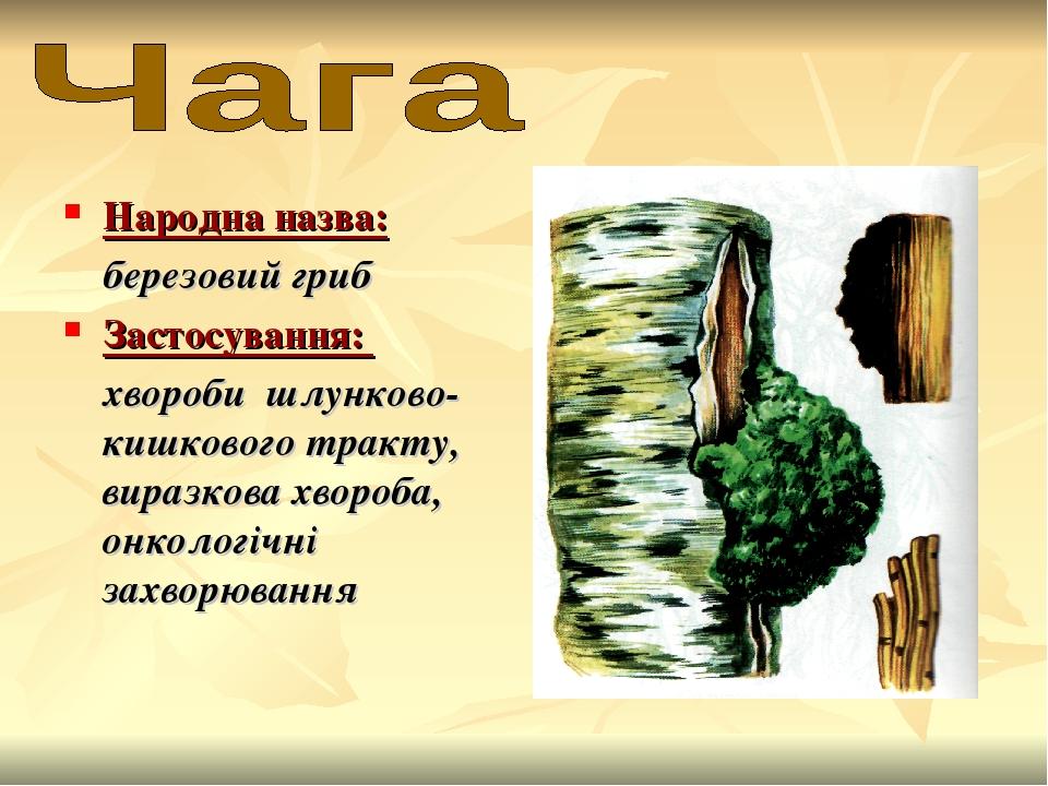 Народна назва: березовий гриб Застосування: хвороби шлунково-кишкового тракту, виразкова хвороба, онкологічні захворювання
