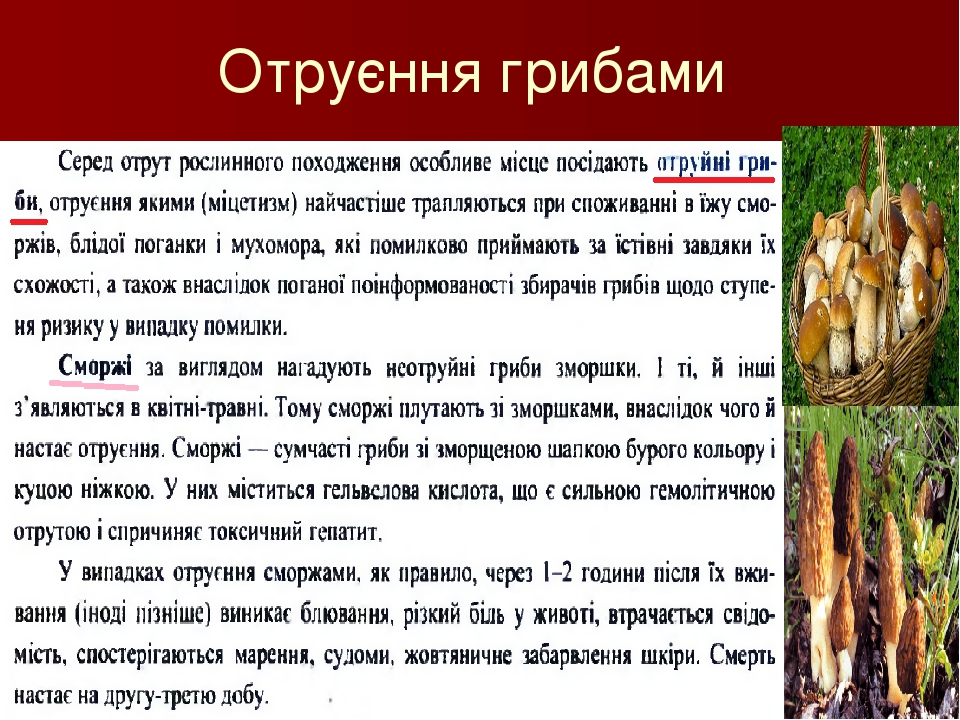 Отруєння грибами Савченко Т.Т.