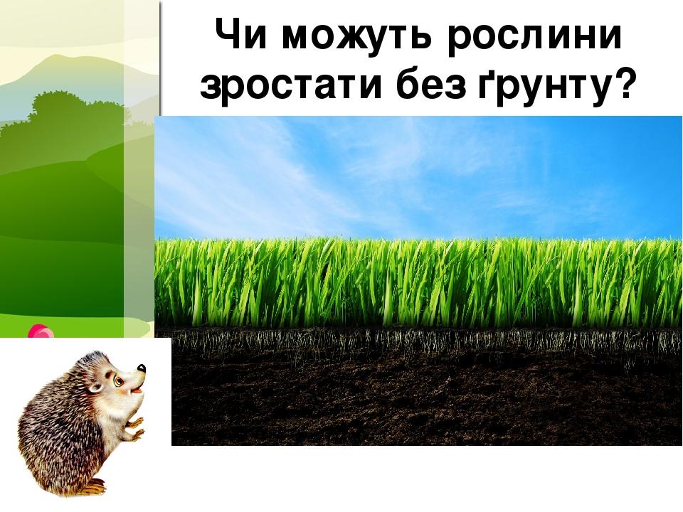 Чи можуть рослини зростати без ґрунту? ProPowerPoint.Ru