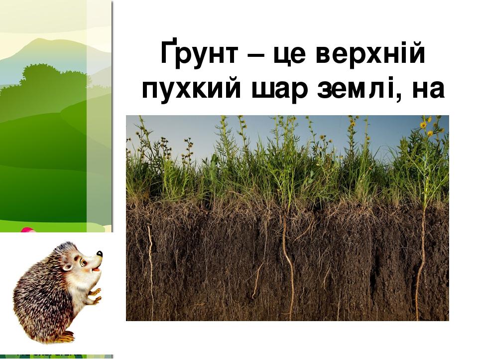 Ґрунт – це верхній пухкий шар землі, на якому ростуть рослини ProPowerPoint.Ru