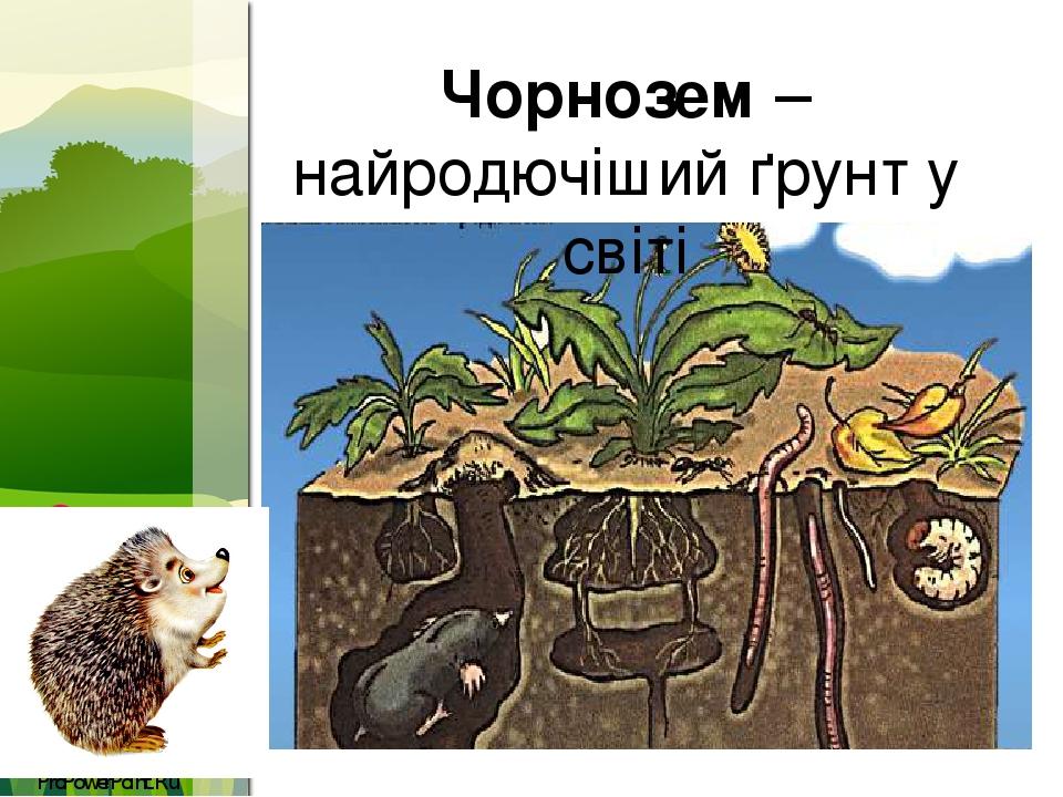 Чорнозем – найродючіший ґрунт у світі ProPowerPoint.Ru