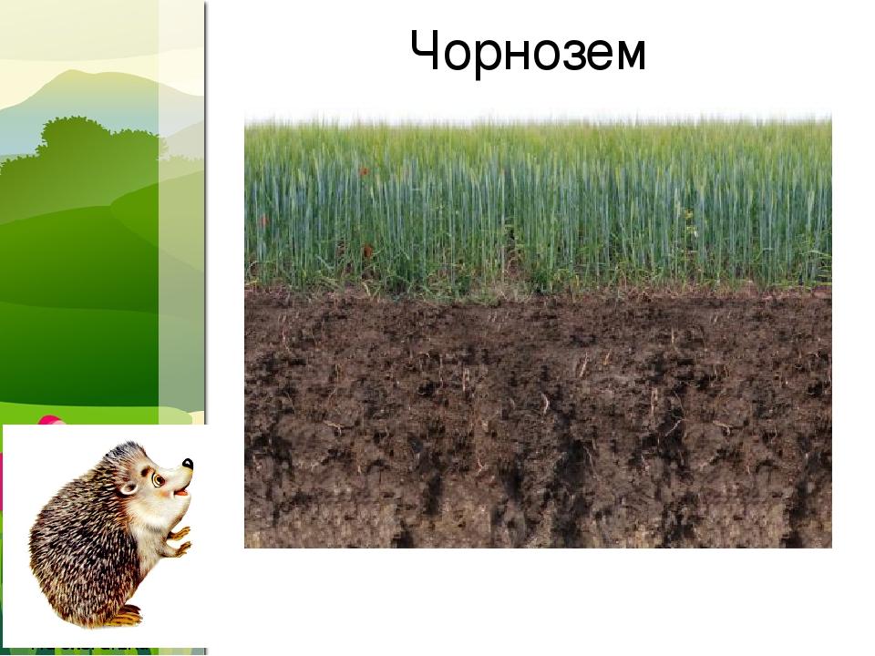 Чорнозем ProPowerPoint.Ru