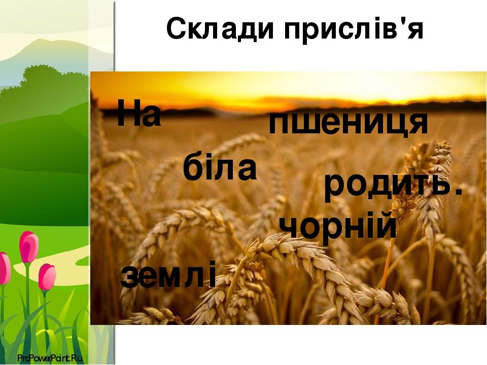 Склади прислів'я На чорній землі біла пшениця родить. ProPowerPoint.Ru