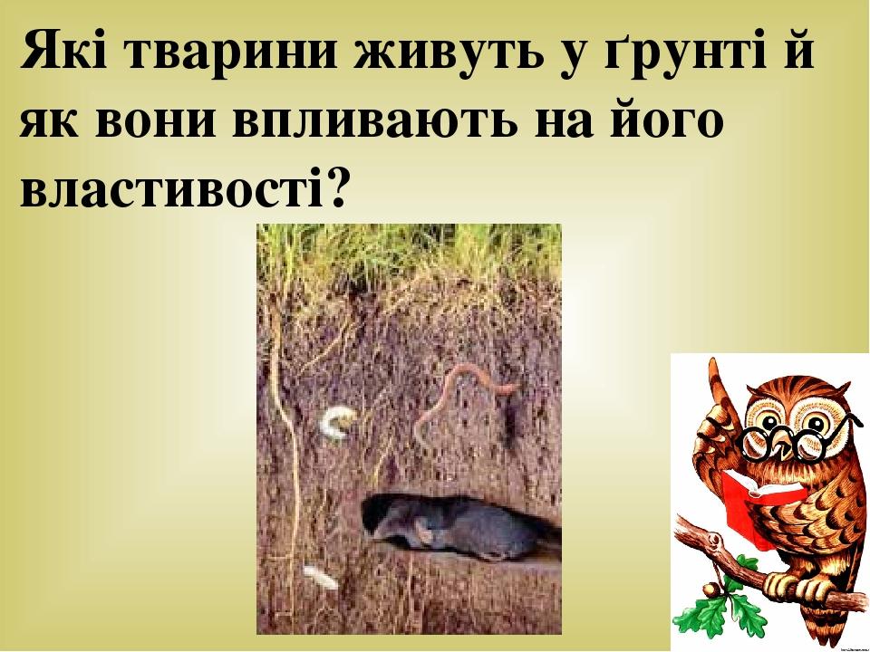 Які тварини живуть у ґрунті й як вони впливають на його властивості?