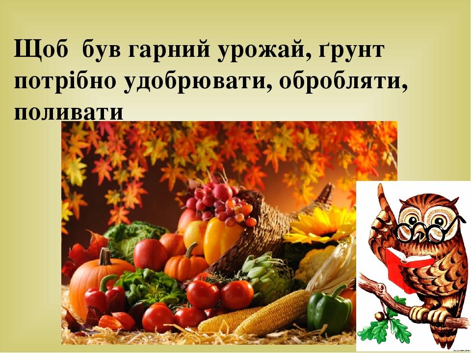 Щоб був гарний урожай, ґрунт потрібно удобрювати, обробляти, поливати