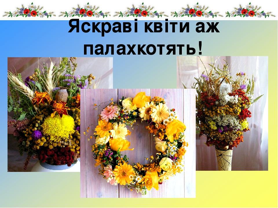 Яскраві квіти аж палахкотять!