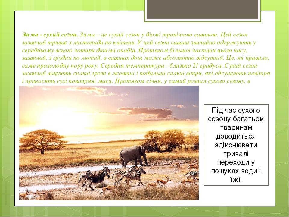 Зима - сухий сезон.Зима – це сухий сезон у біомі тропічною саваною. Цей сезон зазвичай триває з листопада по квітень. У цей сезон савани звичайно ...