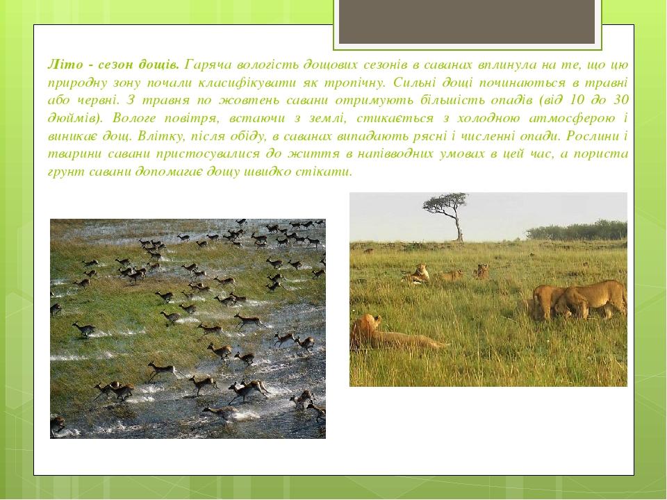 Літо - сезон дощів.Гаряча вологість дощових сезонів в саванах вплинула на те, що цю природну зону почали класифікувати як тропічну. Сильні дощі по...