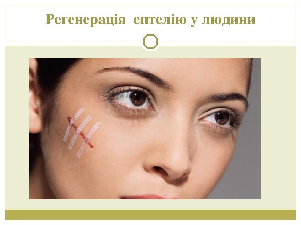 Регенерація ептелію у людини