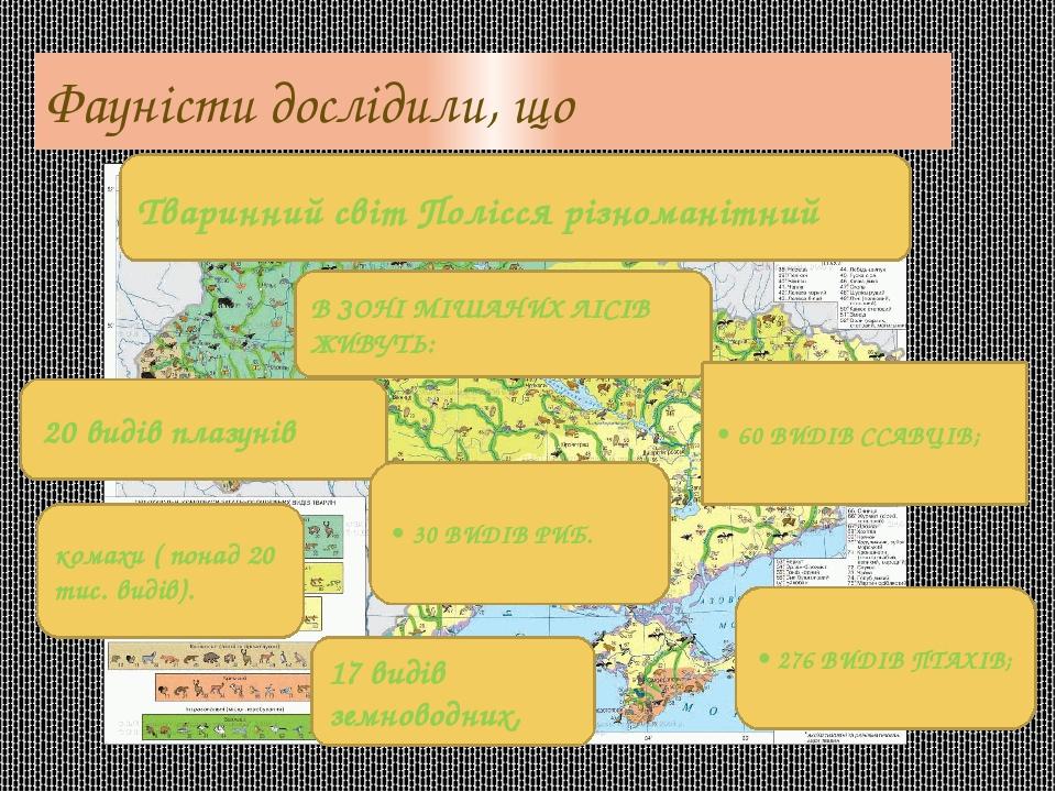 Фауністи дослідили, що В ЗОНІ МІШАНИХ ЛІСІВ ЖИВУТЬ: Тваринний світ Полісся різноманітний 20 видів плазунів • 60 ВИДІВ ССАВЦІВ; • 276 ВИДІВ ПТАХІВ; ...
