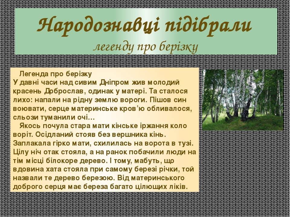 Народознавці підібрали легенду про берізку Легенда про берізку У давні часи над сивим Дніпром жив молодий красень Доброслав, одинак у матері. Та ст...