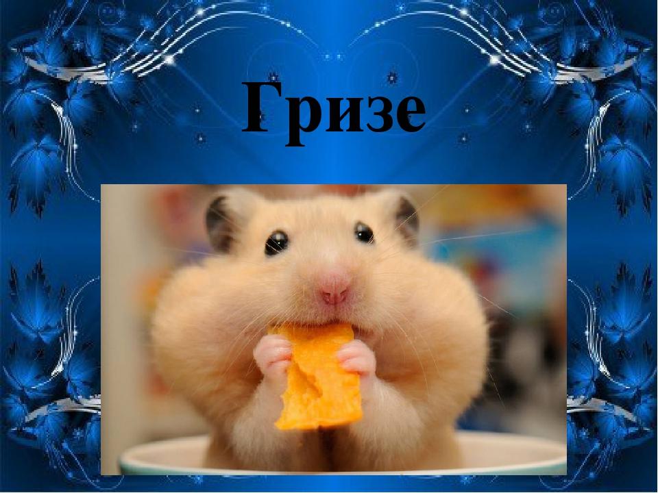 Гризе