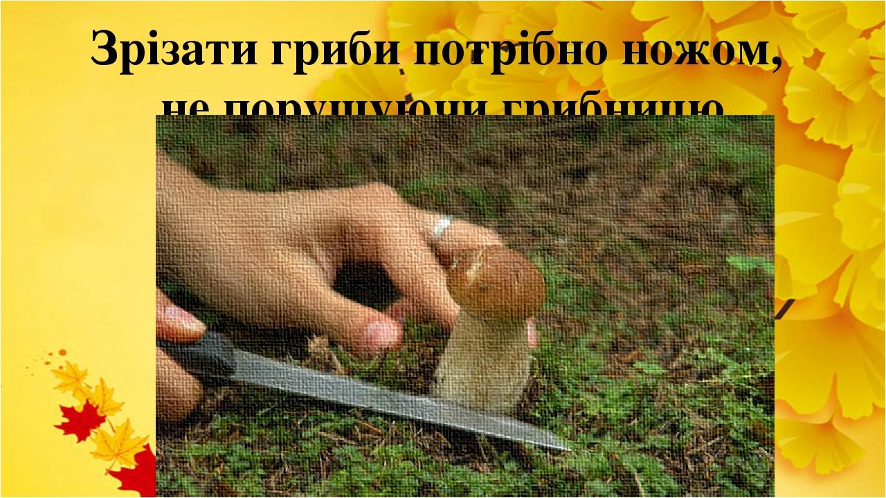 Зрізати гриби потрібно ножом, не порушуючи грибницю