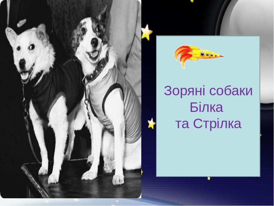 Зоряні собаки Білка та Стрілка