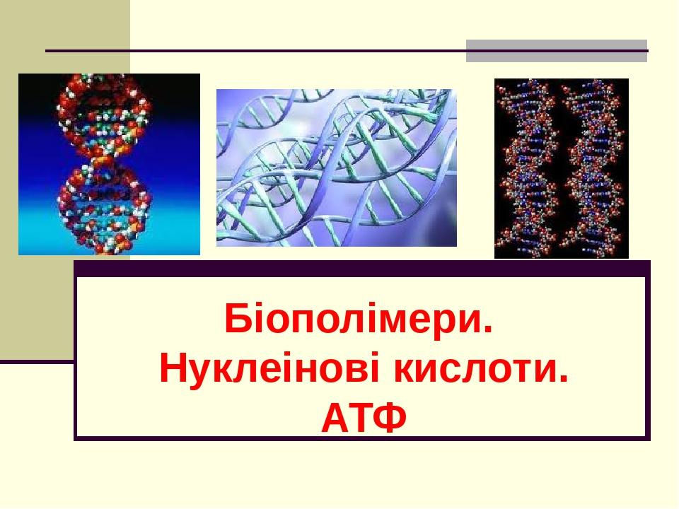 Біополімери. Нуклеінові кислоти. АТФ