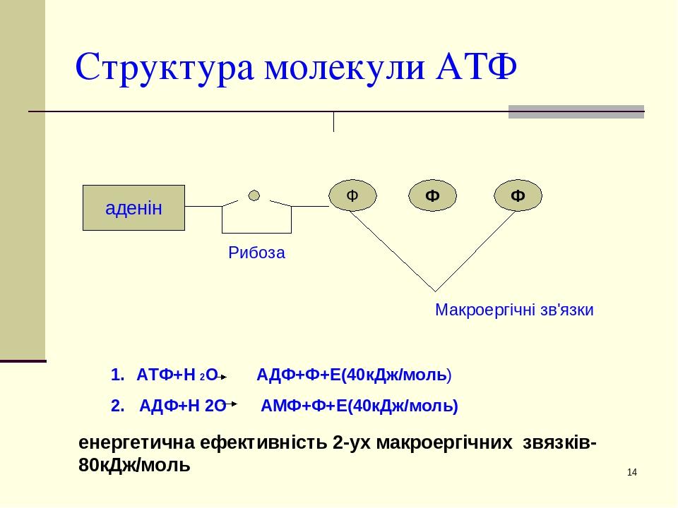 * Структура молекули АТФ аденін Ф Ф Ф Рибоза Макроергічні зв'язки АТФ+Н 2О АДФ+Ф+Е(40кДж/моль) 2. АДФ+Н 2О АМФ+Ф+Е(40кДж/моль) енергетична ефективн...