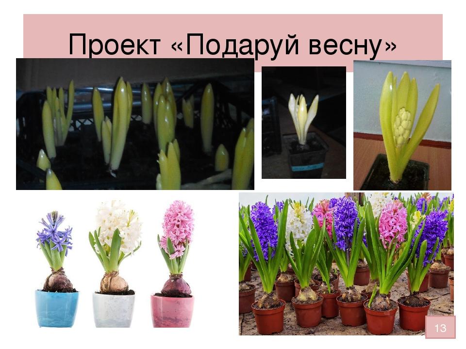 Проект «Подаруй весну» 13