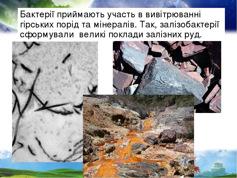 Бактерії приймають участь в вивітрюванні гірських порід та мінералів. Так, залізобактерії сформували великі поклади залізних руд.
