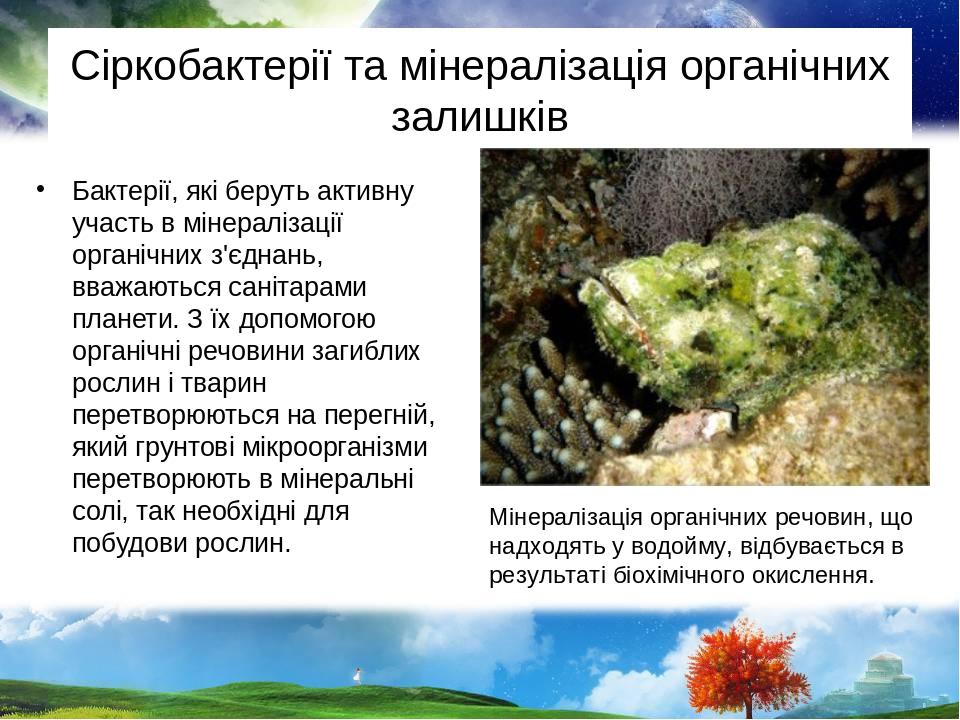 Сіркобактерії та мінералізація органічних залишків Бактерії, які беруть активну участь в мінералізації органічних з'єднань, вважаються санітарами п...