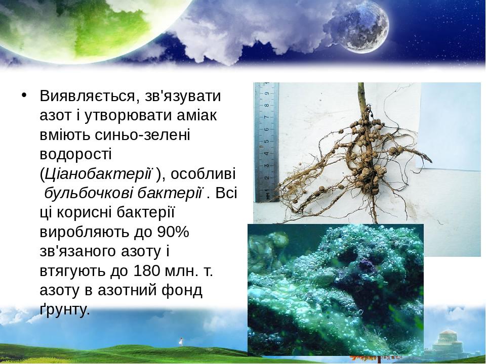 Виявляється, зв'язувати азот і утворювати аміак вміють синьо-зелені водорості (Ціанобактерії),особливібульбочкові бактерії. Всі ці корисні бакт...