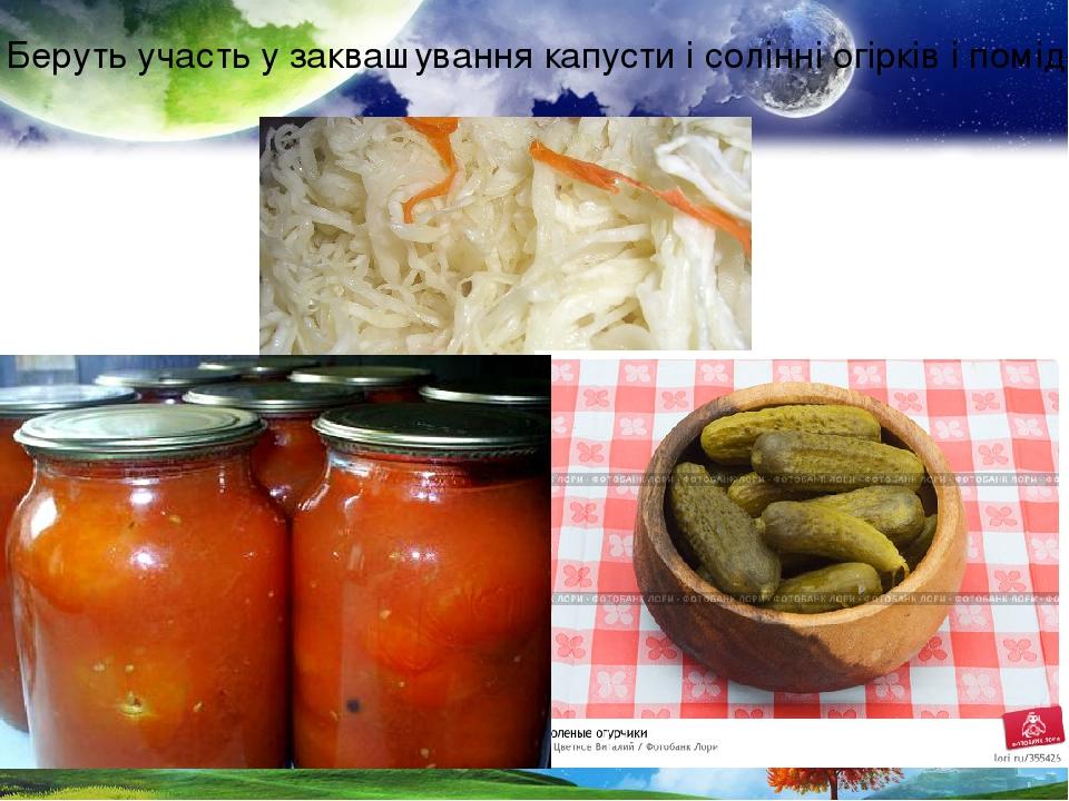 Беруть участь у заквашування капусти і солінні огірків і помідорів.