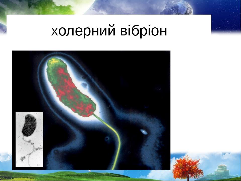 Холерний вібріон