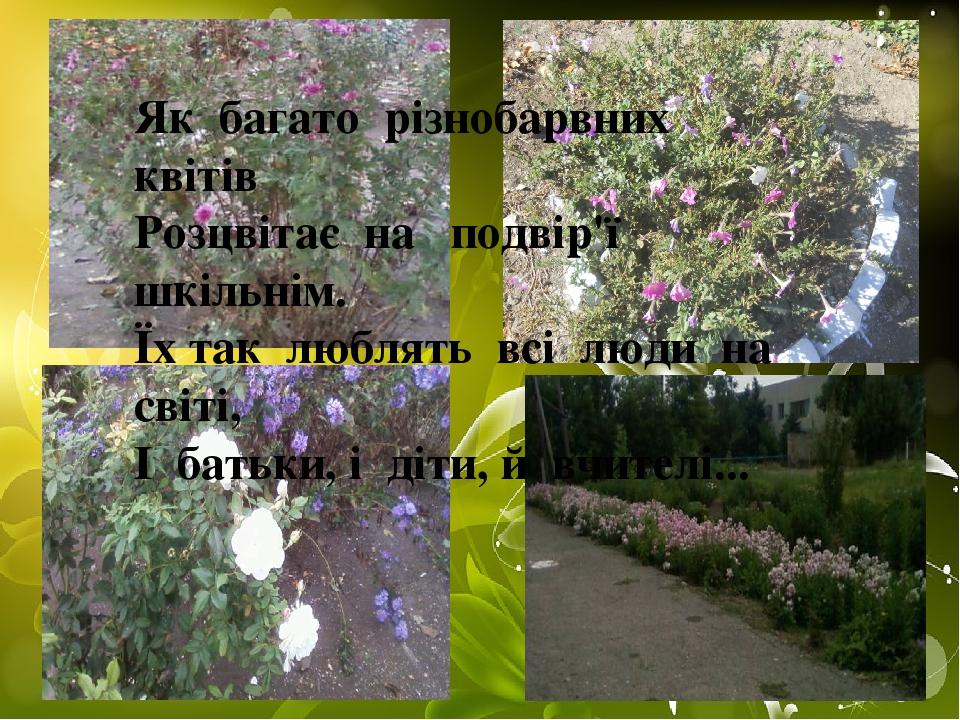 Як багато різнобарвних квітів Розцвітає на подвір'ї шкільнім. Їх так люблять всі люди на світі, І батьки, і діти, й вчителі...