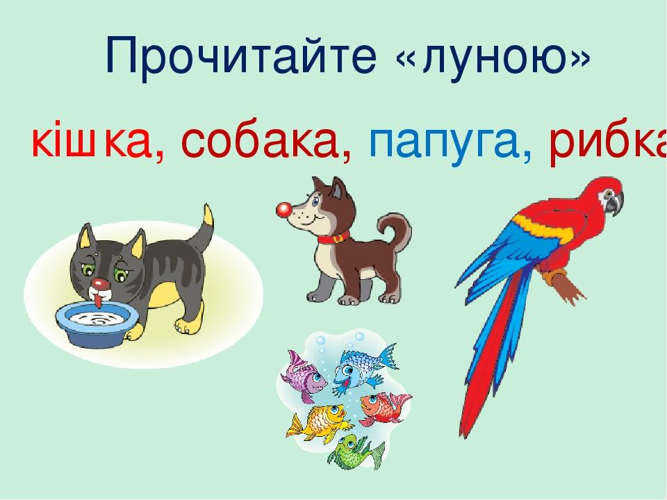 Прочитайте «луною» кішка, собака, папуга, рибка