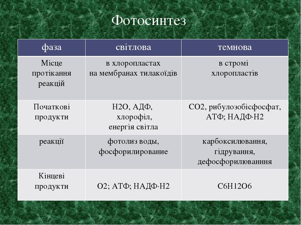 Фотосинтез фаза світлова темнова Місцепротіканняреакцій в хлоропластах на мембранахтилакоїдів встромі хлоропластів Початковіпродукти Н2О, АДФ, хлор...
