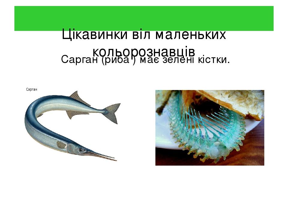 Цікавинки віл маленьких кольорознавців Сарган (риба ) має зелені кістки.