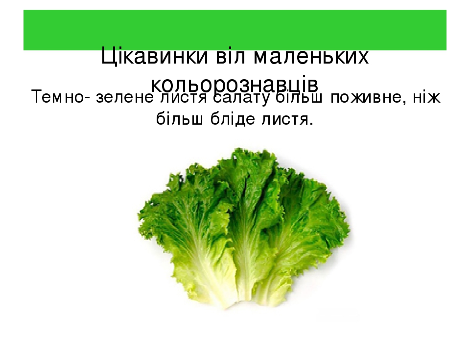 Цікавинки віл маленьких кольорознавців Темно- зелене листя салату більш поживне, ніж більш бліде листя.