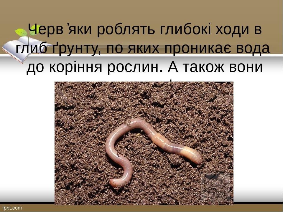 Черв ҆яки роблять глибокі ходи в глиб ґрунту, по яких проникає вода до коріння рослин. А також вони спушують ґрунт