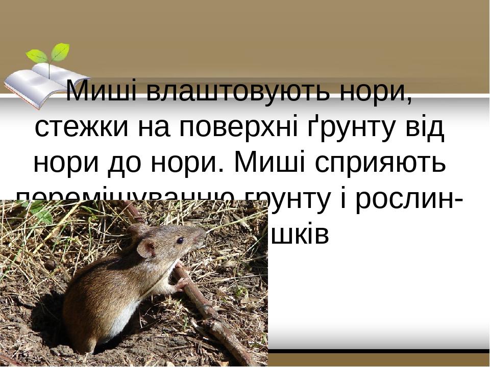 Миші влаштовують нори, стежки на поверхні ґрунту від нори до нори. Миші сприяють перемішуванню грунту і рослин-них залишків